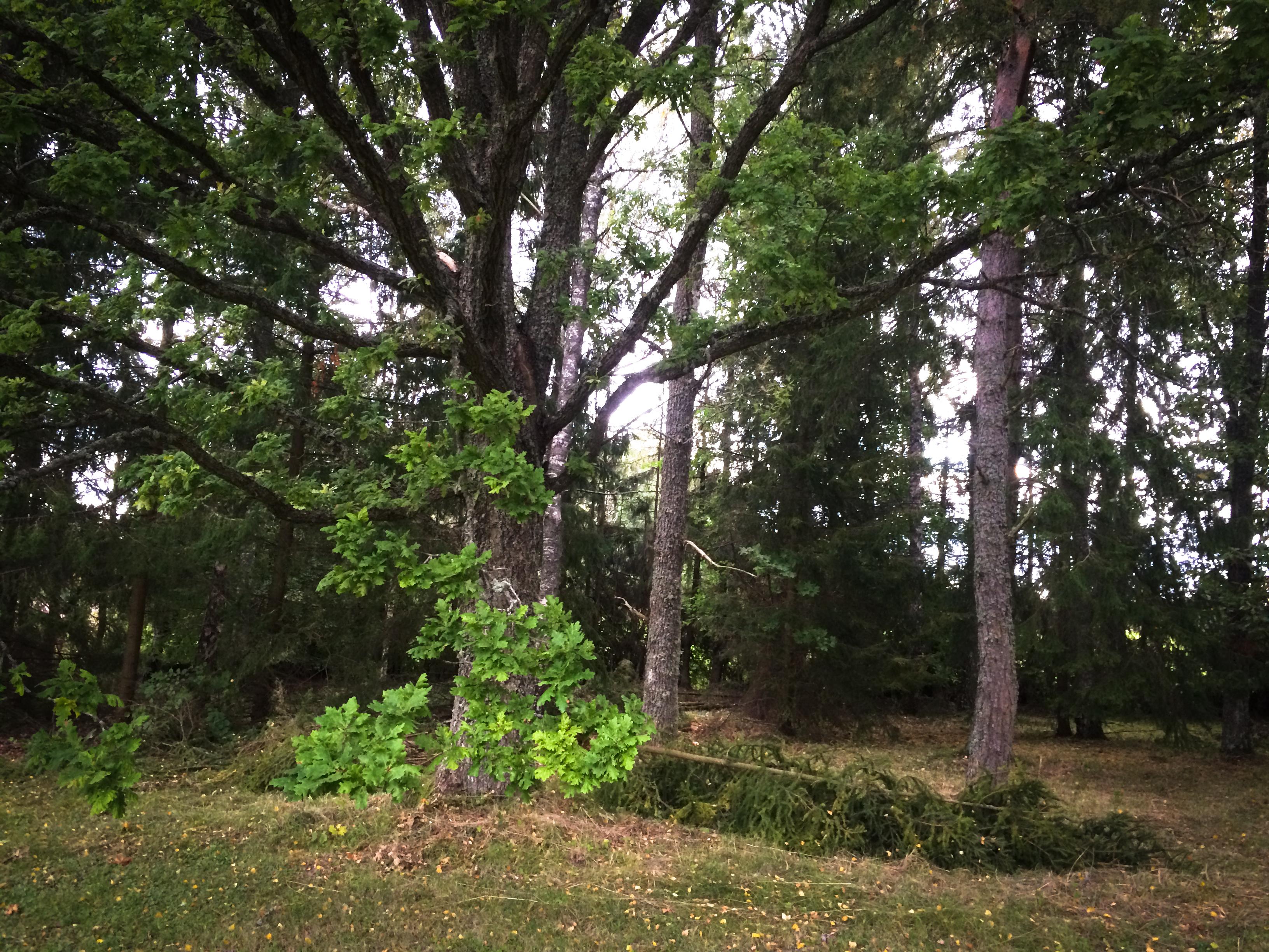 Från skog till park
